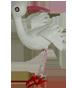 bird24