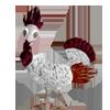 bird31b